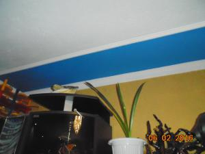 post-12440-1454771344_thumb.jpg