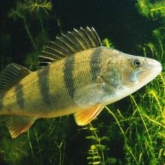 Рыбачек24