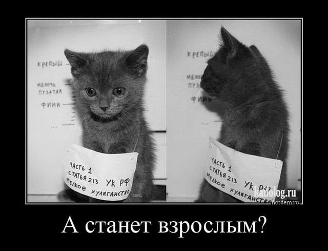 КотЭ.jpg