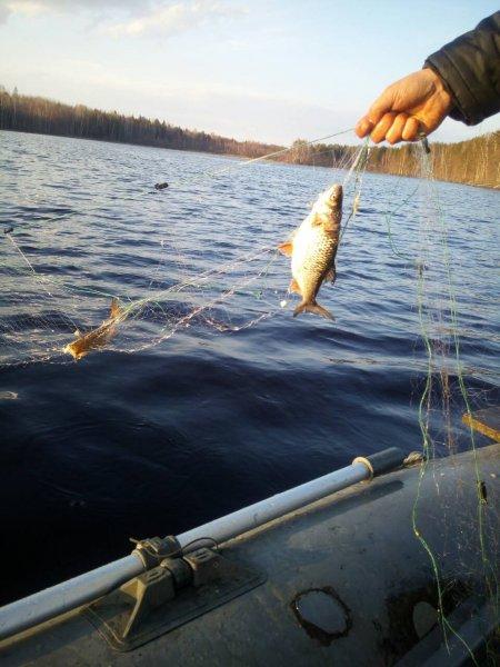 сети рыба.jpg