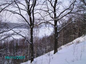 post-1901-1195455648_thumb.jpg