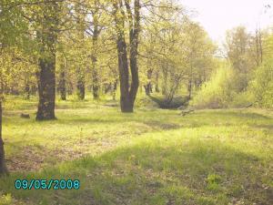 post-1901-1210753424_thumb.jpg