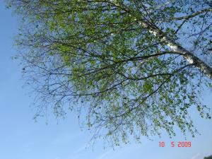 post-2183-1242228447_thumb.jpg